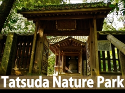 banner Tatsuda_R